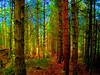 285 - Redwood