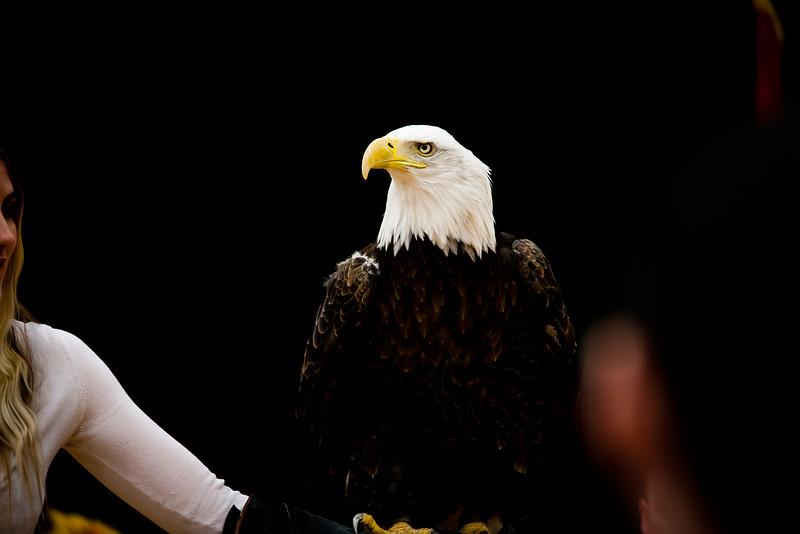 martin eagle-27.jpg