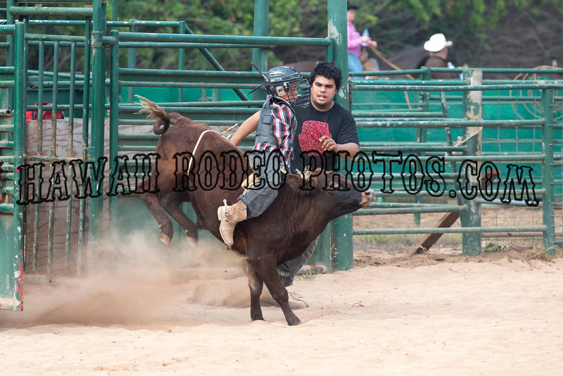 STEER RIDING