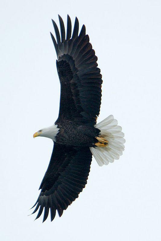 C Street Eagles - 1-20-05