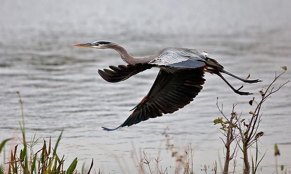 2011 - Birds