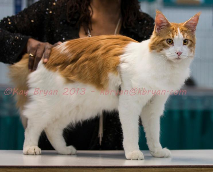 CatShow2014056_1.jpg