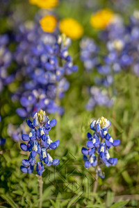 Peggy's Ranch_6048-Edit