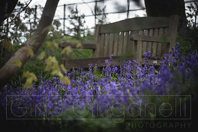 The Bluebell Woods at Hole Park 2021