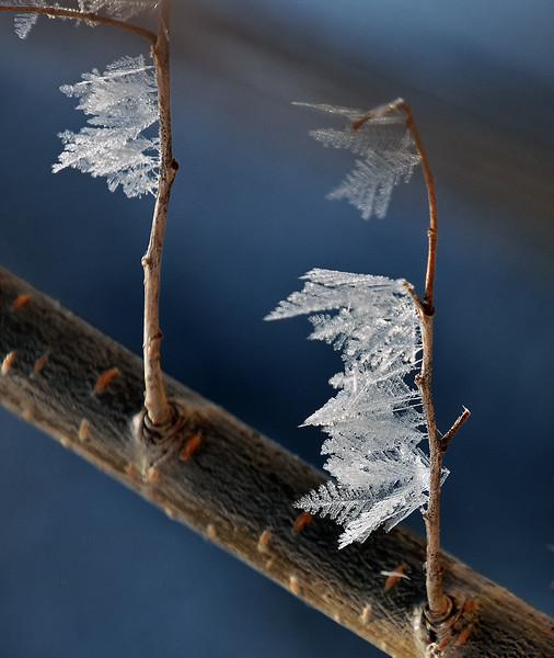 Branch crystals DSC_2428.jpg