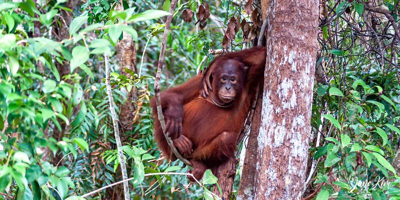 2012.10.07_Borneo_DSC_7434-Edit-Juno Kim.jpg