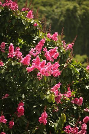 Flora Fauna_0002.JPG