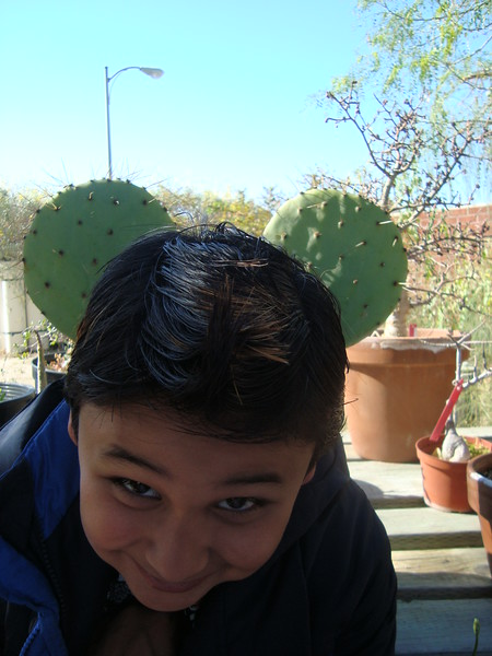 33350000-Mouse-cactus.jpg