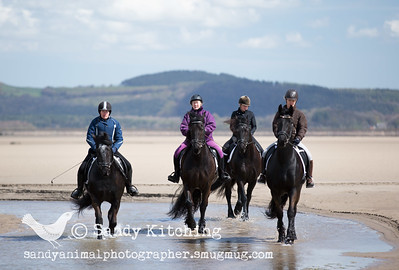 Friesian Beach Experience 4 horses Apr 2015