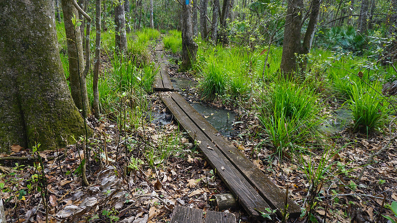 Bog boardwalks in forest