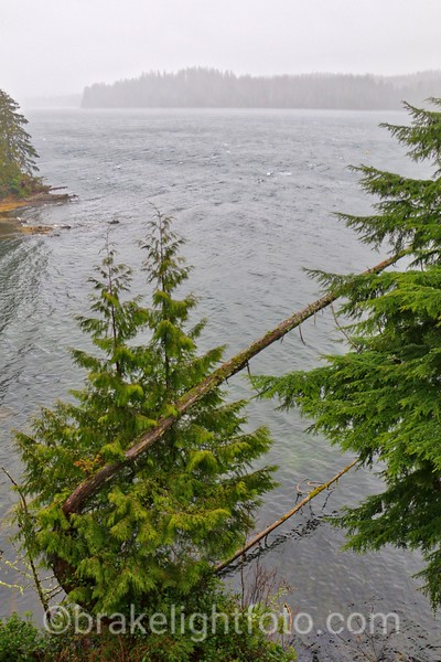 Storm Winds blowing down Ucluelet Harbour