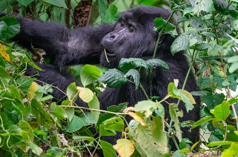 Uganda_T_Gor-2205.jpg