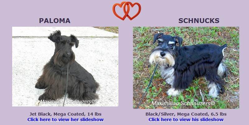Paloma & Schnucks Puppies, DOB 1/16/2017