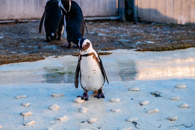 Tonis Zoo-0402.jpg