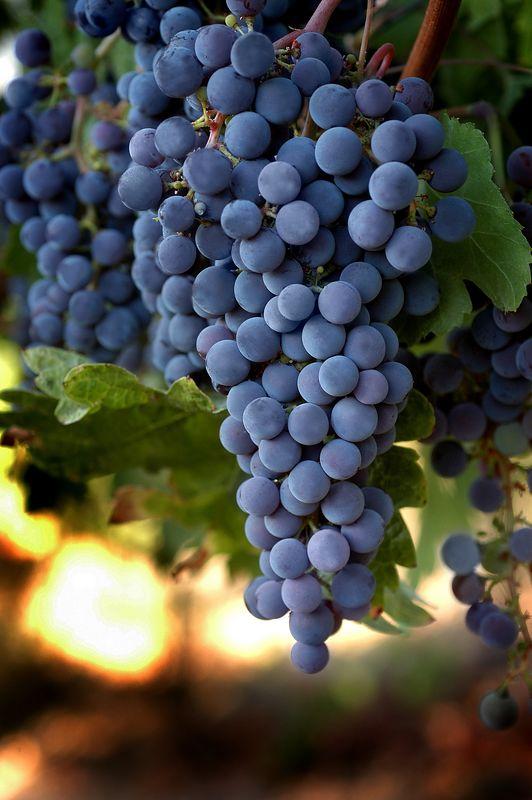 World of Wine 2005