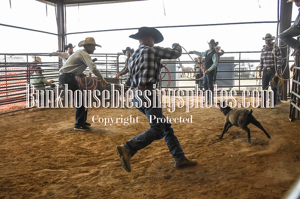 GOAT ROPING - ADULTS