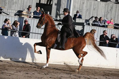 5. Three Gaited Park Pleasure