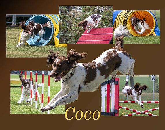 Coco2.jpg