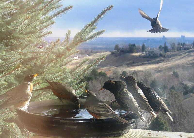 birds (180).jpg