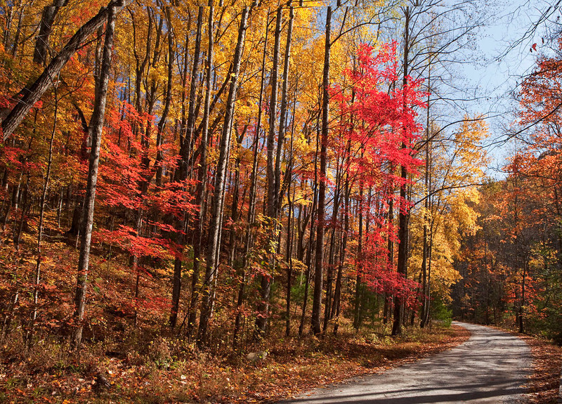 Fall Scenic Drive 3, Great Smoky Mountains, Tennessee