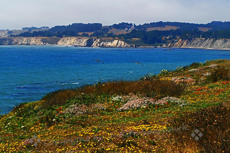 California Coastal Vista