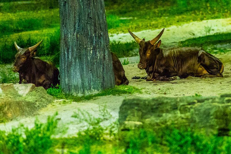 Night-Safari-9814.jpg