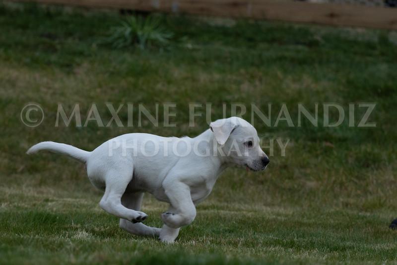 Weika Puppies 24 March 2019-6740.jpg