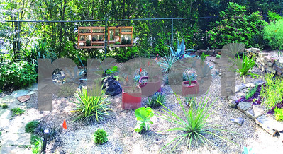 succulents-might-just-be-your-kind-of-plant