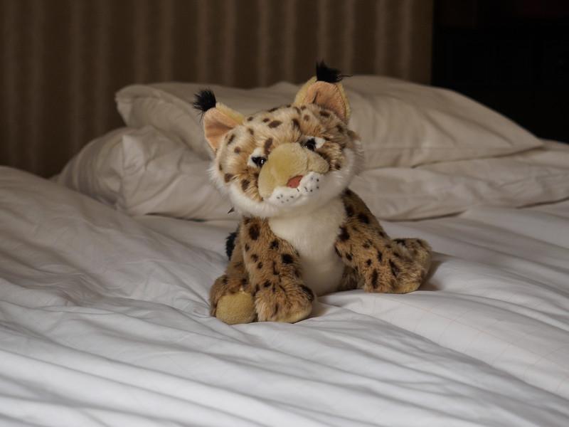 Hotel cuddly toy