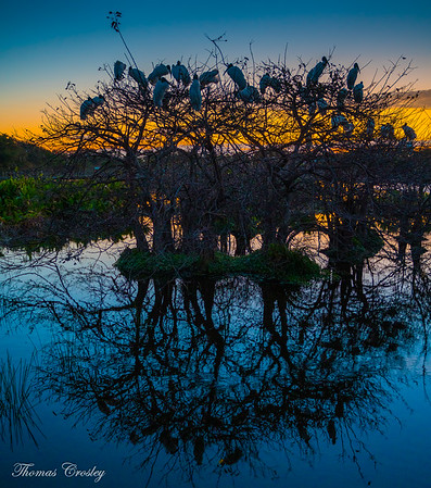 Wakodahatchee Wetland 2019