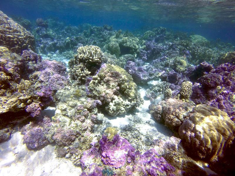 Coral garden - Raanui Snorkel Trip - Bora Bora