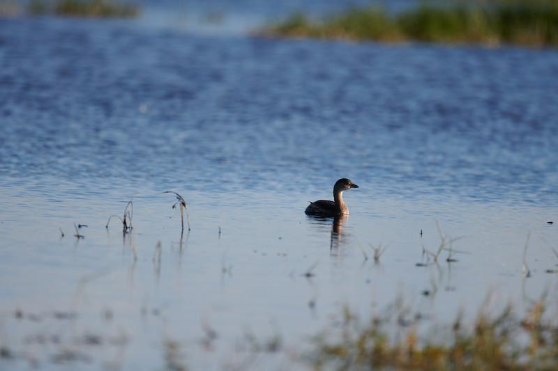 20181103 - Brazoria Wildlife Refuge-85B_3917.jpg
