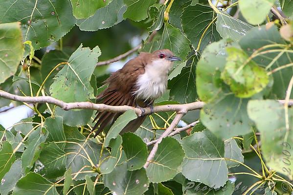 Birding 2009 August