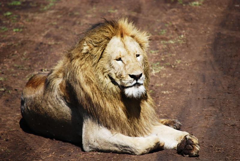 Ngorongoro (125).JPG