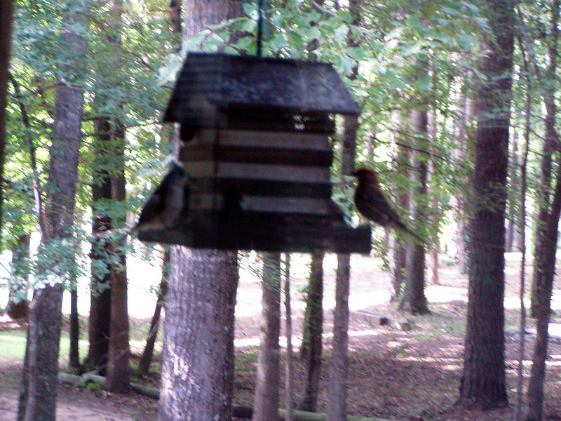 18. Birds on Porch feeder.JPG