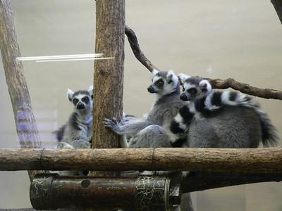 2007 Cincinnati Zoo