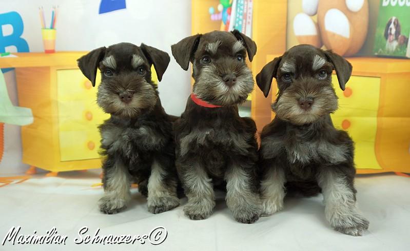 Amy Pups  015.jpg