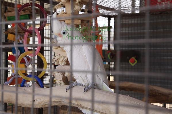 Oasis Sanctuary for Parrots, Benson, Arizona 2016