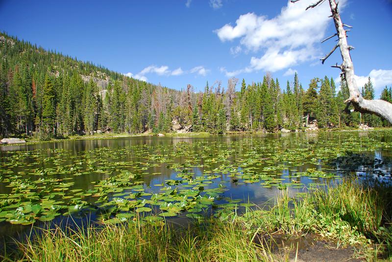 Nymph Lake in RMNP.