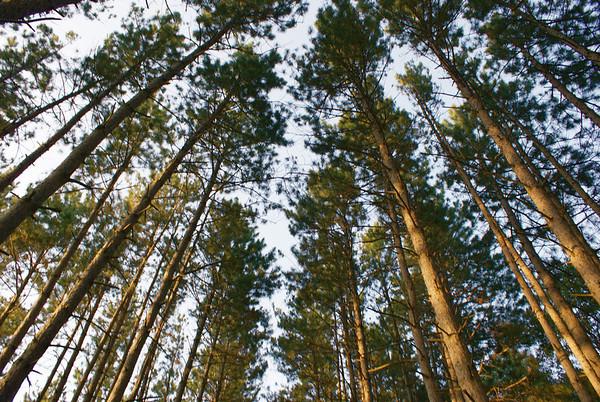 Trees, Leaves, Needles.....