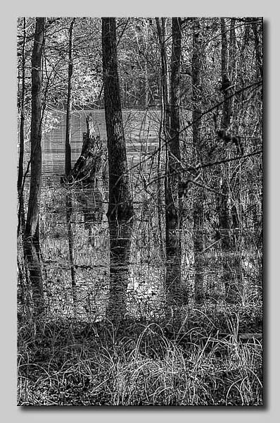 5051_swamp2