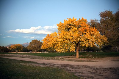 Cottonwood.Fall•11.5.2009