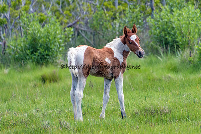 Duckie's Colt