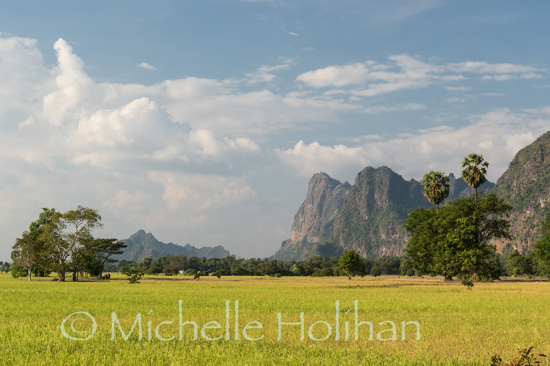 Rice paddies ready for harvest an Mt. Zwegabin in Hpa-An, Myanmar