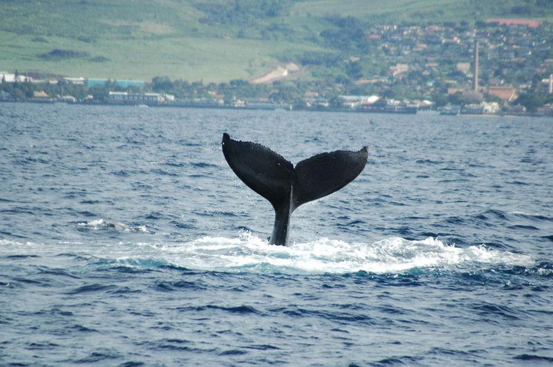 whaletail 24.jpg