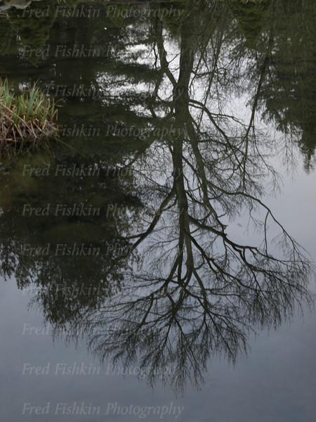 sayen reflection.jpg