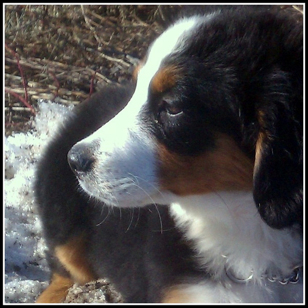 2012.3.8 Winnie.50a.jpg