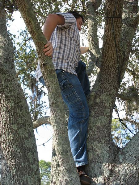 Dan climbs another tree