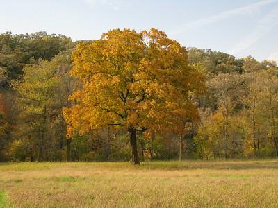 My favorite tree in all seasons