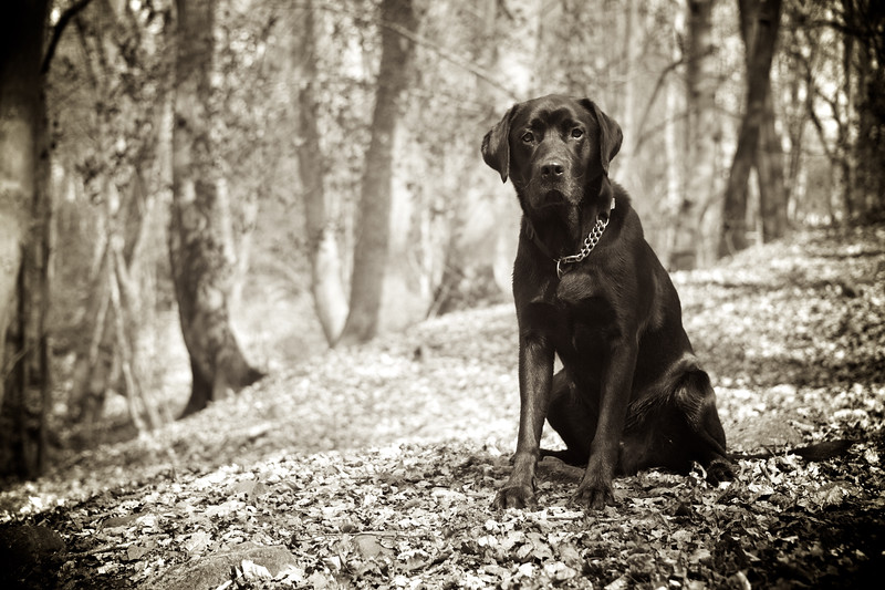 Pet Photoshoot Packages